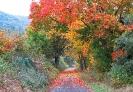 Eindrücke aus Frühling, Sommer, Herbst und WInter