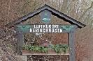 Heringhausen_7
